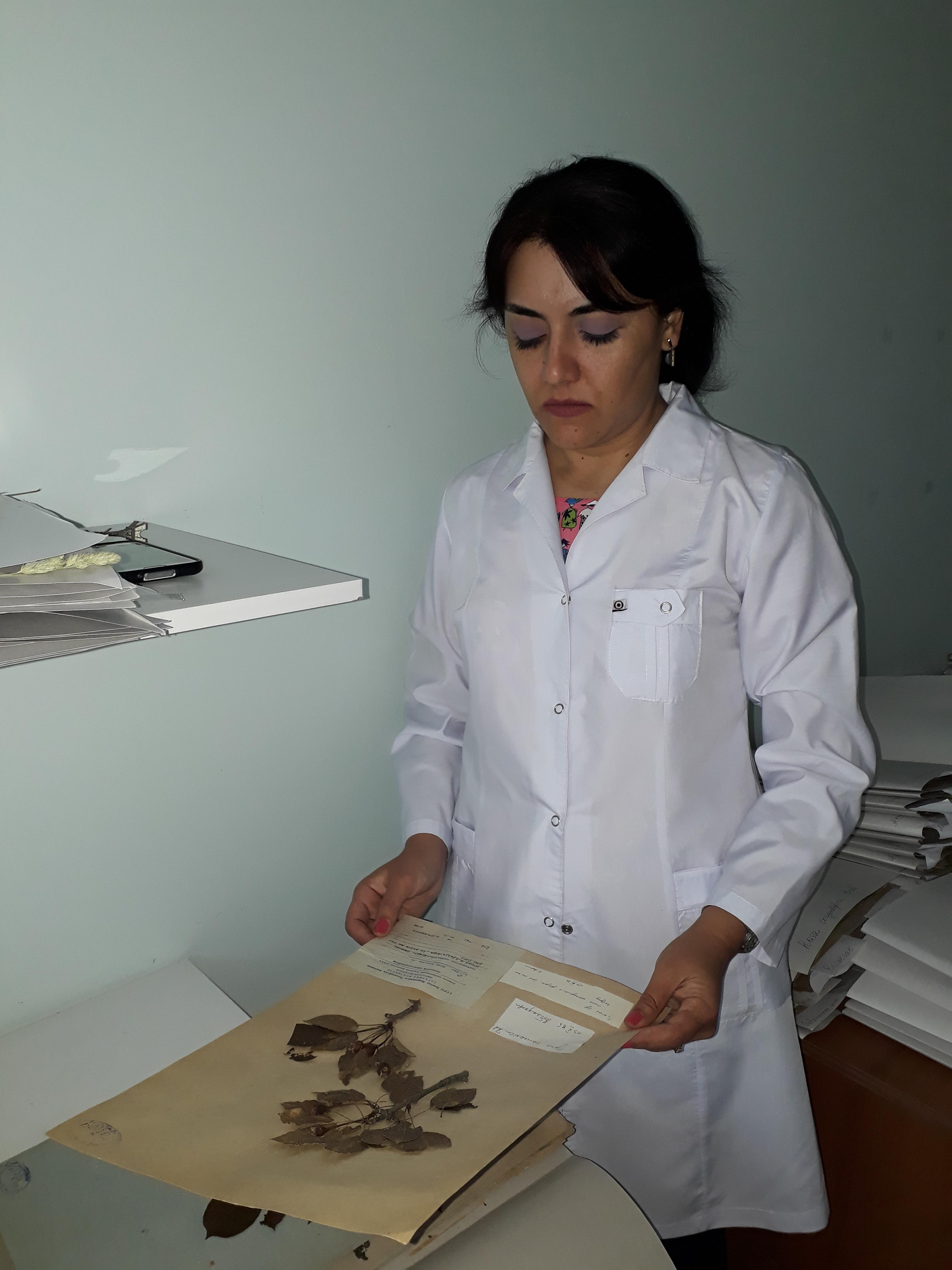 AMEA Botanika İnstitutunun gənc mütəxəssisi beynəlxalq layihədə uğurla iştirak edir