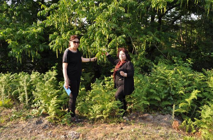 Hirkan Milli Parkındakı dərman bitkiləri tədqiq edilib